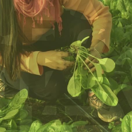 La UNLP convoca a una nueva campaña solidaria para comedores comunitarios de la región